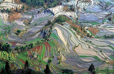 800px-terrace_field_yunnan_