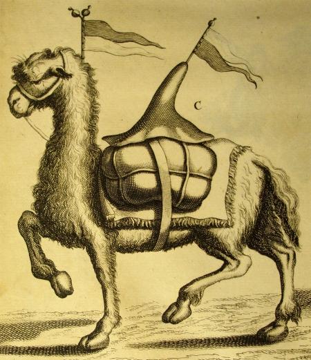 Camel Straight
